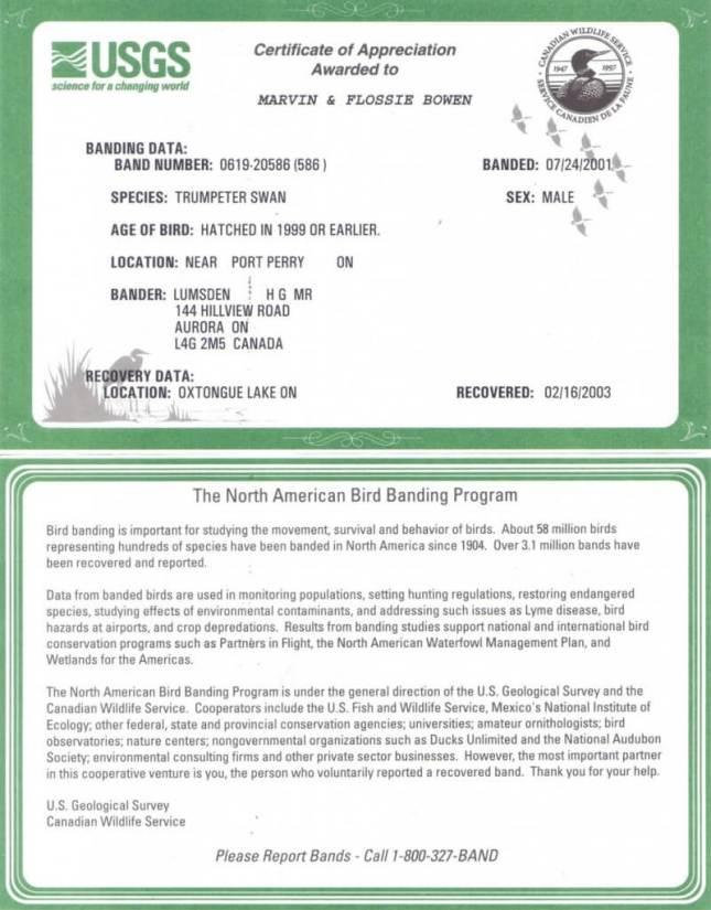 Trumpeter Swan - certificate of appreciation award - bowens