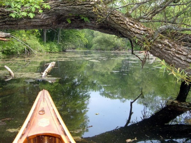 Canoeing on the Otonabee River - Ontario