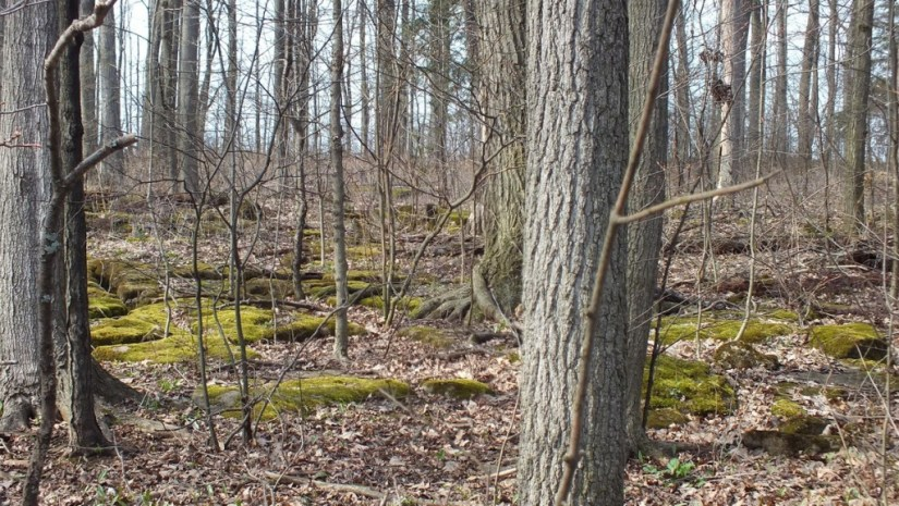 Forest at Beamer Memorial Conservation Area, Grimsby