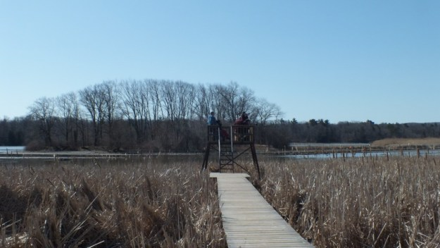 Marsh boardwalk lookout - Cootes Paradise Marsh - Hamilton - Ontario