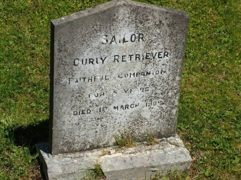 sailor curly retriever tombstone - powerscourt - wicklow - ireland