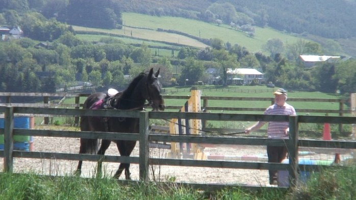 Chris works horse - Enniskerry - wicklow - ireland