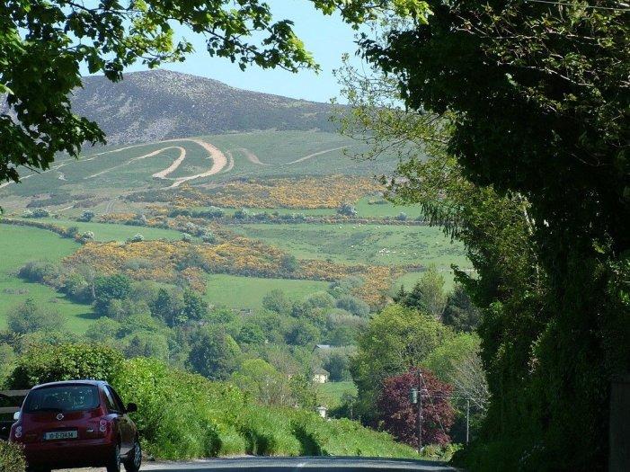 Gorse growing on hillside - Enniskerry - Wicklow - Ireland