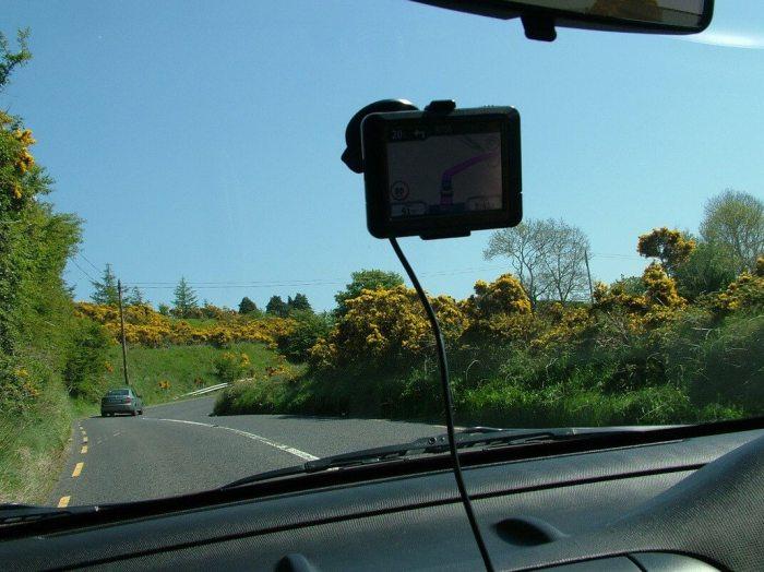 Yellow Gorse growing near Glencree River - Enniskerry - Wicklow - Ireland