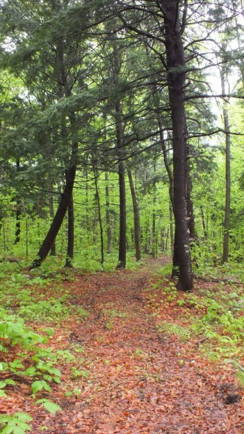beetle lake trail - springtime trail - oxtongue lake - ontario