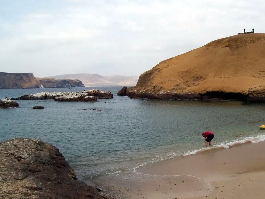 bob washes off sand - national reserve of paracas - peru