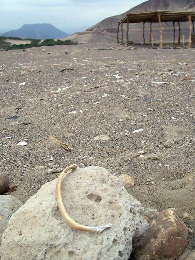 A bone sitting on rock at the Chauhilla Cemetery near Nazca in Peru, South America.