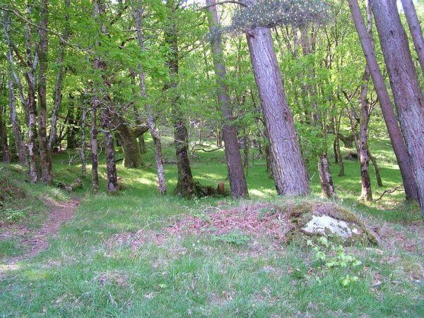 forest near poulanass waterfall - wicklow mountain national park - ireland