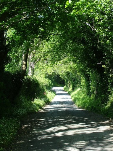 green country road - near Oonagh Bridge - Enniskerry - Wicklow - Ireland