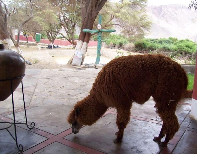 maria reiche gravesite - nazca - peru - south america