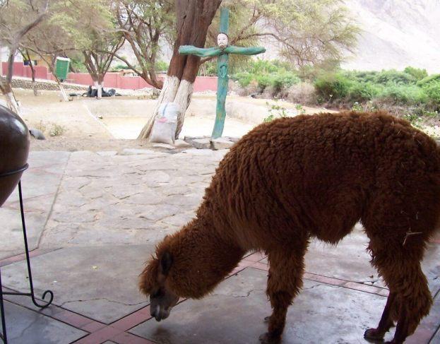 Gravesite at the Maria Reiche museum near Nazca in Peru