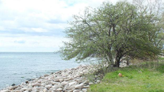 tommy thompson park - looking towards lake ontario --- Toronto - Ontario