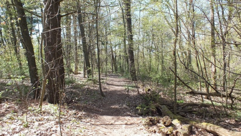 trail through forest, Thicksons Woods, Whitby, Ontario