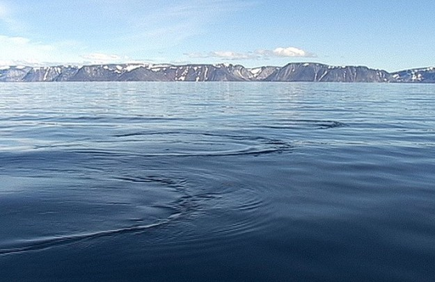 Bubble rings created by a Bowhead whale on the surface of the water off Kekerten Island in the Cumberland Sound, off Baffin Island, Nunavut, Canada