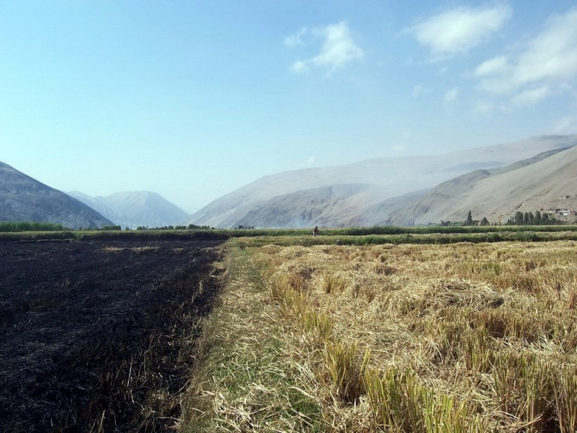 farm fields along camana river - peru