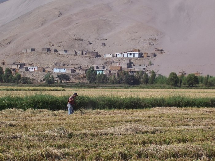 farmer works field near camana - peru