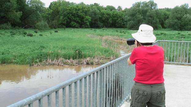 jean takes picture of an eastern phoebe - whitevale - ontario