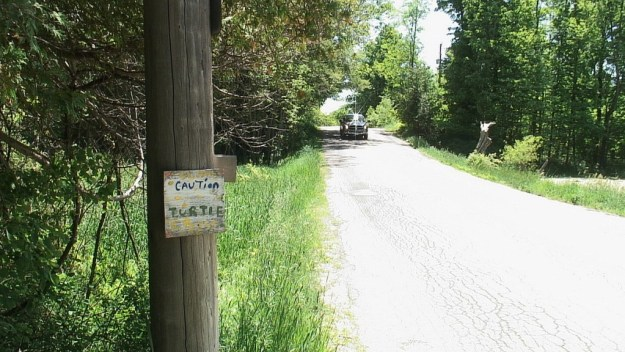 truck approaches pond with turtles - near forks of the credit provincial park - ontario