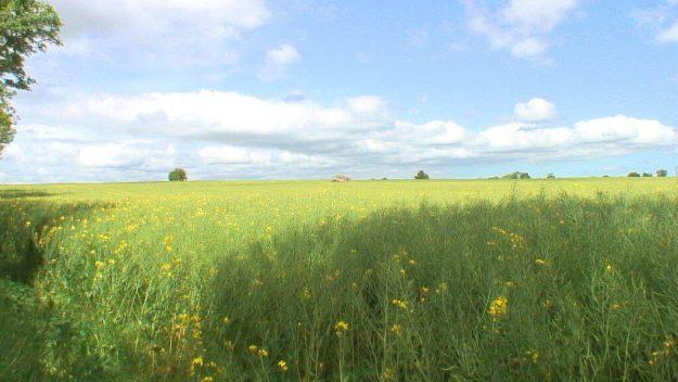 blue sky above farm field - brownshill dolmen - ireland