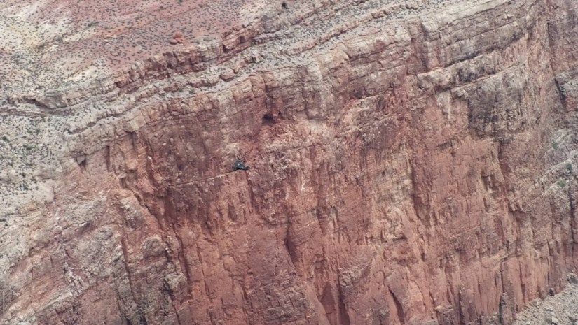 Condor in flight - Battleship Rock Grand Canyon