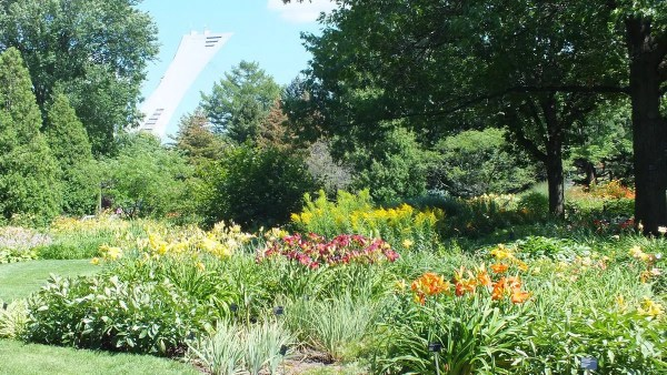 Daylily garden - Montreal Botanical Garden - Frame To Frame Bob & Jean