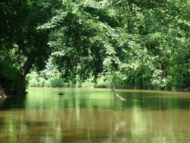 nottawasaga river - minesing wetlands, ontario
