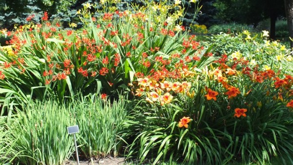orange and red in the Daylily garden - Montreal Botanical Garden - Frame To Frame Bob & Jean