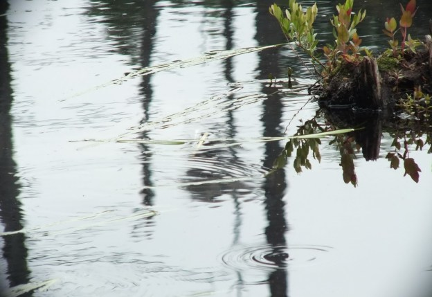rain drops on swamp water, oxtongue lake, ontario