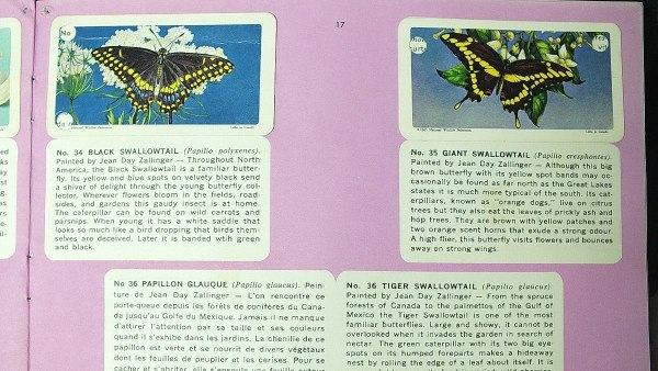 black swallowtail and giant swallowtail tea cards