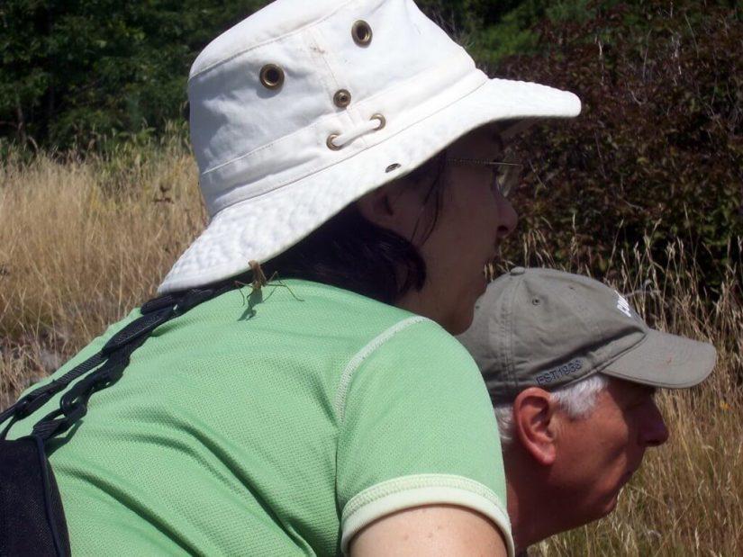 praying mantis lands on jeans back, frontenac provincial park, ontario