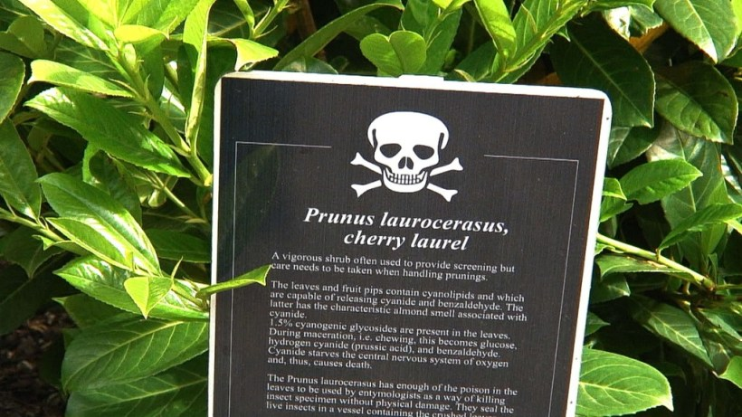 Cherry laurel sign in the Poison Garden at Blarney Castle in County Cork, Ireland