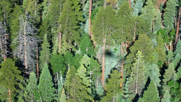 flight-over-kaibab-Nationa-forest-8