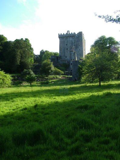 green meadow growing at blarney castle, ireland