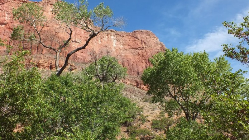tree tops indian garden 40