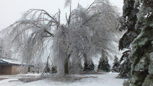 ice storm toronto 2013 - pic10