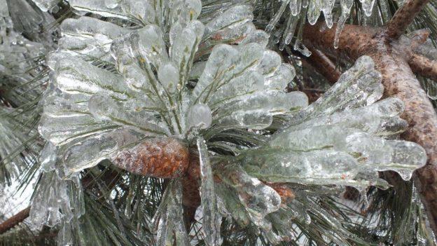 ice storm toronto 2013 - pic15