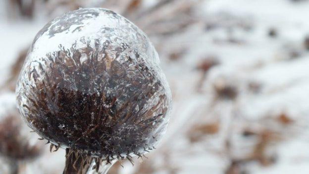 ice storm toronto 2013 - pic28
