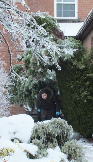 ice storm toronto 2013 - pic7