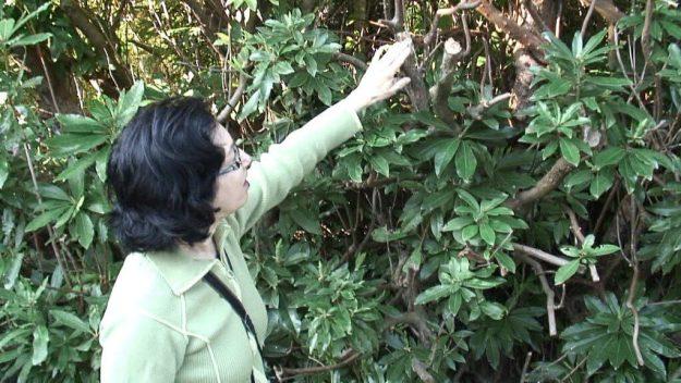 jean checks out plant at glendalough