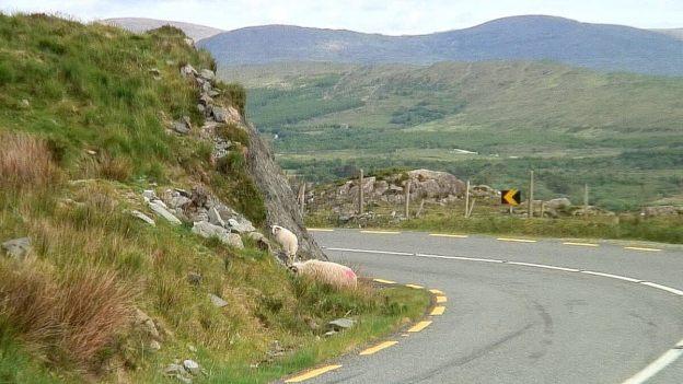 tire marks caha pass roadway 9c