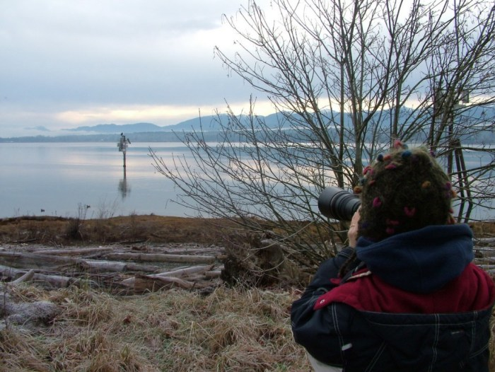jean takes photo - bald eagles on navigational beacon - comox