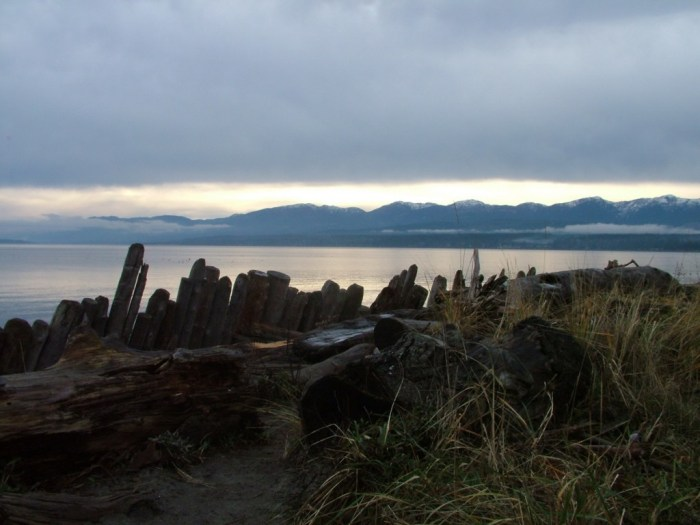 shoreline at comox - british columbia