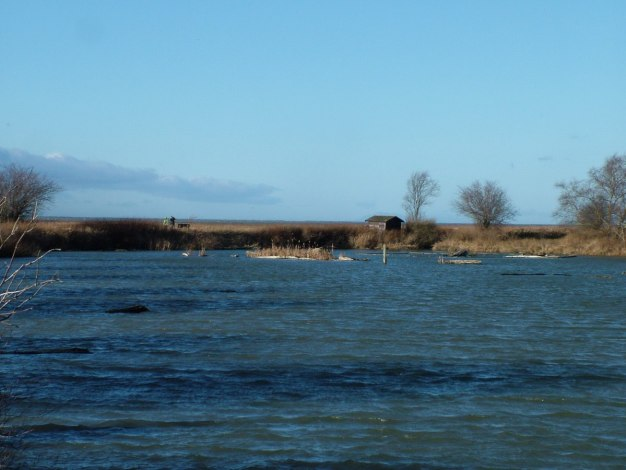 Wetlands at Reifel Migratory Bird Sanctuary in Delta, BC, Canada.