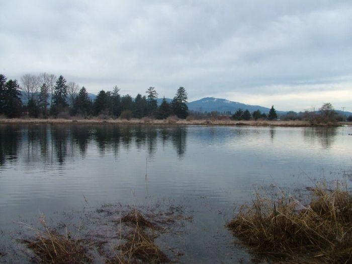 wetlands near comox - vancouver island