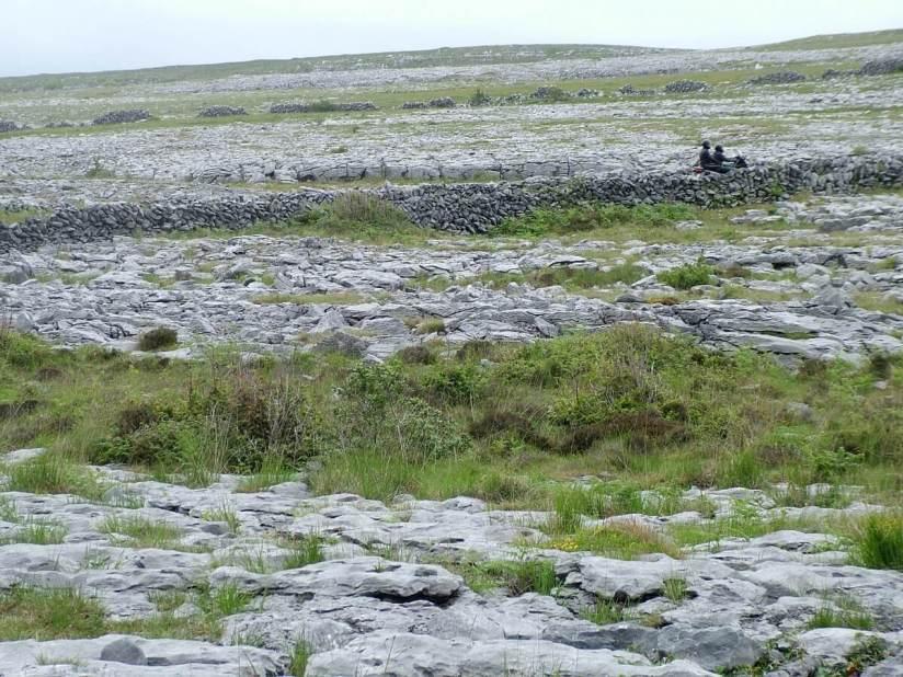 burren stone fences and roadway - burren national park - ireland
