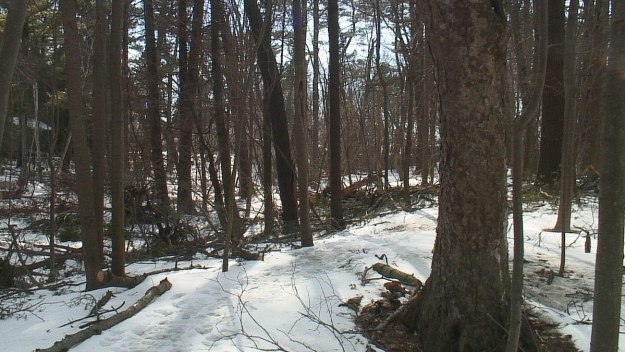 hiking trail in thicksons woods - whitby