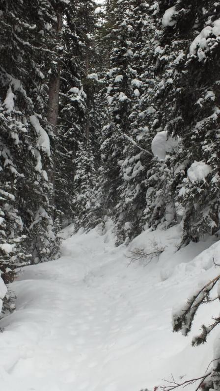Lake Agnes snowshoe trail at Banff National Park, in Alberta, Canada