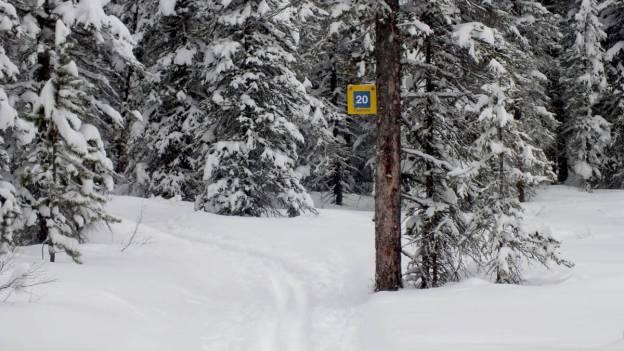 pipestone ski trail winter - banff national park 3