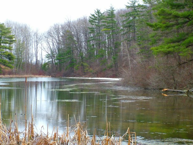 pond_dickson Conservation area_ontario 2