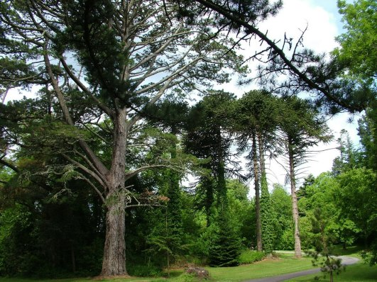 An image of the forest beside Ashford Castle in County Mayo, Ireland. Photography by Frame To Frame - Bob and Jean.